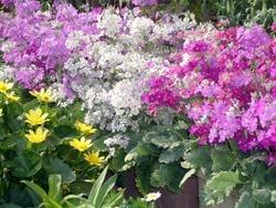 flower01[1]