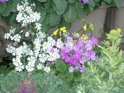 flower02[1]