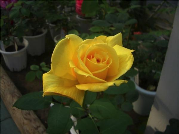 Flower 2015030401